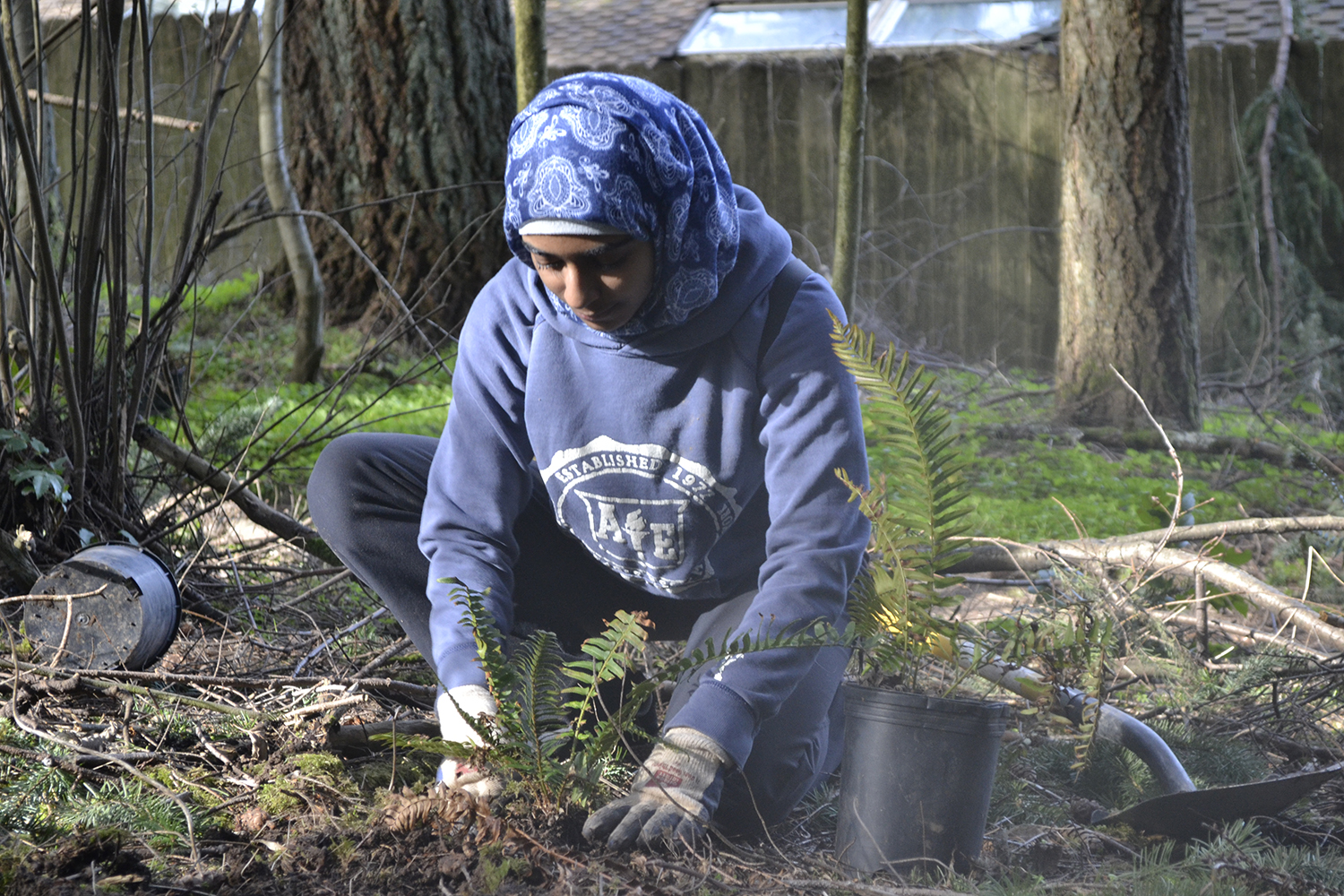 At Hyland Woods in south Beaverton, a volunteer for THPRD's Natural Resources Department plants one of the 12,000 native shrubs and trees that were sowed during the project.
