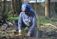 THPRD volunteers support short-term nature projects in record numbers