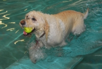 Before Aquatic Center closure, Doggie Paddle returns