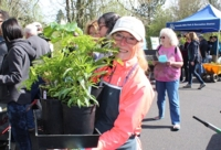 Spring Native Plant Sale this Saturday at Tualatin Hills Nature Center