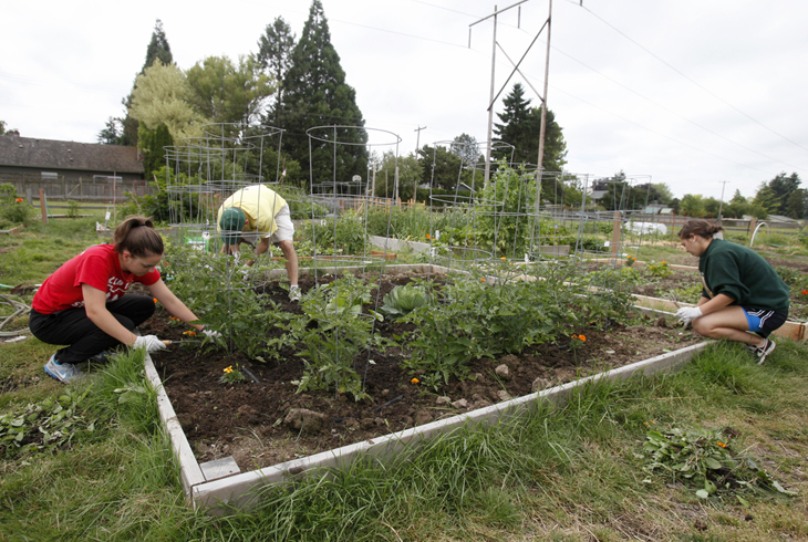 THPRD provides gardening opportunities at 12 sites within the district  For more information  call. Community Garden   Rent a Community Garden Plot   THPRD   THPRD