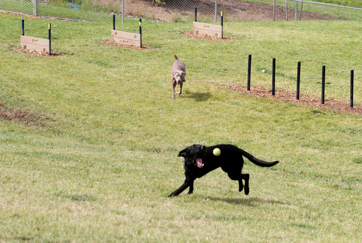 THPRD  has three off-leash dog areas to serve the needs of our four-legged friends (and their people).