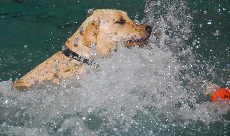 Doggie Paddle - A dog-only open swim!